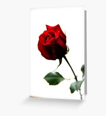 Sweet Gift Greeting Card