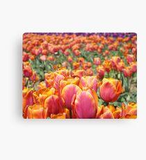 Tulip Festival Fine Art Prints Pink Orange Tulips Floral Canvas Print
