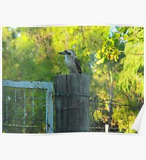 Bluff's  Best Kookaburra Sanctuary    Poster