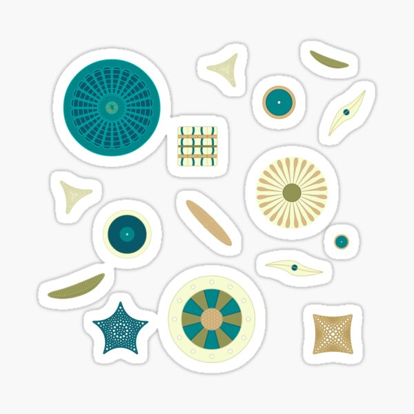 Delightful Diatoms Sticker