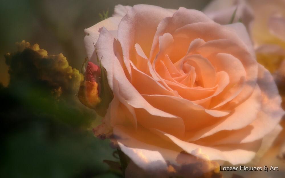 Majesty by Lozzar Flowers & Art