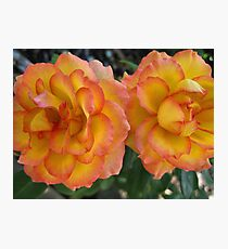 Yellow Pink Roses Photographic Print