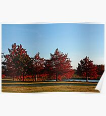 Row of Cypress in the Autumn Afternoon Sun Poster