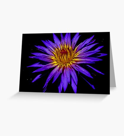 Water Lily - Nymphaea 'Blue Aster' Greeting Card
