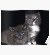 My 2 Little Panthers Poster