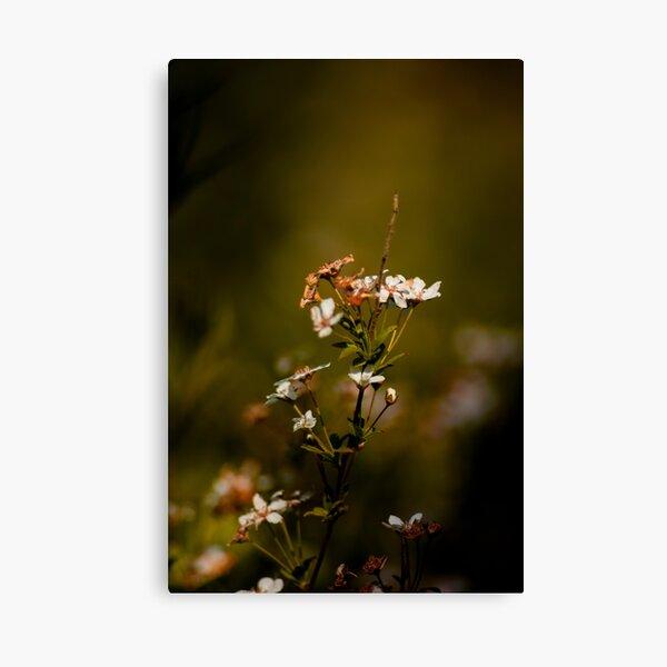 Spring renewal Canvas Print