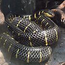 London Zoo/Reptile House/Snake(1 of 2) -(190212)- digital photo  by paulramnora