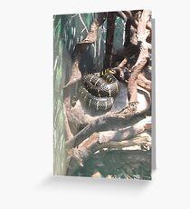 London Zoo/Reptile House/Snake(2 of 2) -(190212)- digital photo  Greeting Card