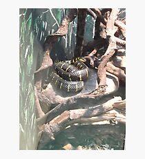 London Zoo/Reptile House/Snake(2 of 2) -(190212)- digital photo  Photographic Print