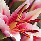 Birthday flowers from Dana by Joyce Knorz