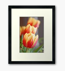 Looking Forward To Spring II Framed Print