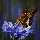 A Skipper and Blue by swaby