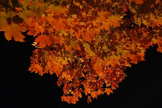 ablaze - fall leaves at night by mellychan