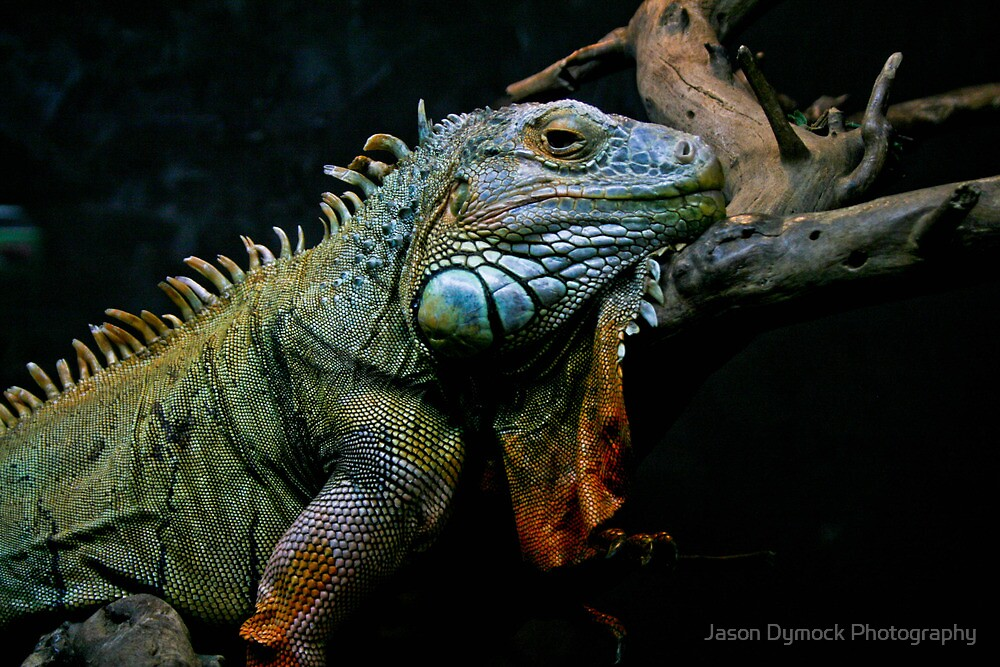 Sleepy Dinosaur by Jason Dymock Photography