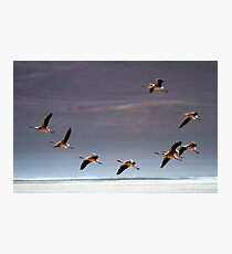 Flamingos, Atacama Desert, Chile Photographic Print