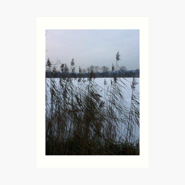 Reeds by a frozen lake (vertical) Art Print