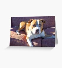 Pitbull on a couch Greeting Card