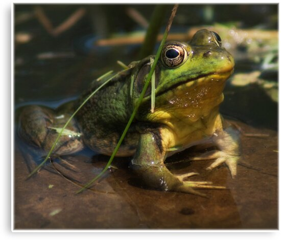 frogger by vince dwyer