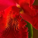 Red Orchid Abstract by Dennis Rubin IPA
