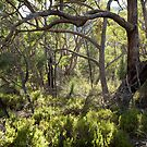 Bushland by Andrew Cowell