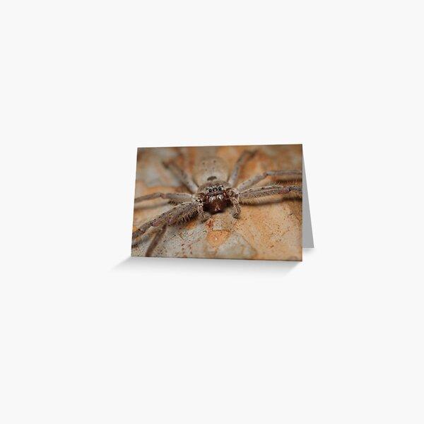 Brown Huntsman - Heteropoda sp. Greeting Card