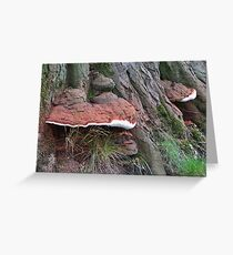 Shelf Fungi Greeting Card