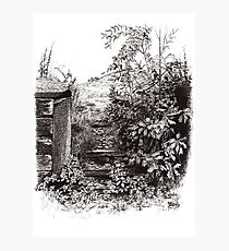 Gateway With Young Oak Tree Photographic Print