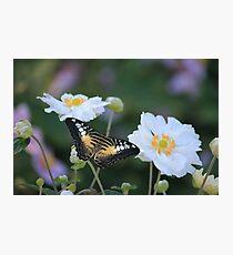 Summer Lovin  Photographic Print