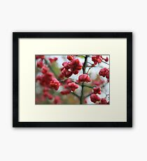 Water droplets Framed Print