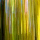 Fall No. 4 - 2011 by Joseph Rotindo