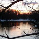 Sunset Swans on the Passaic River, Fall 2010, Fairfield NJ by Jane Neill-Hancock
