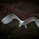 Egret With Red Bud Bokeh by Joe Jennelle