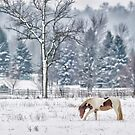 Winter grazing by Daniel  Parent