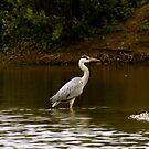 Heron by Lennox George
