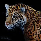 A Rare Beauty by Anne Zoutsos