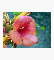 Orange Trumpet Flower Photographic Print