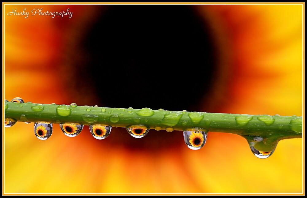 """""""Sunflower droplets"""" by Husky"""