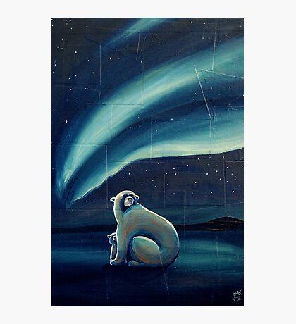 Polar Bears Photographic Print