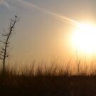 Lone Tree on the Prairie by Brian Gaynor