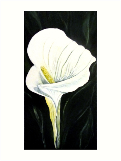 Lily - Flower by Linda Callaghan