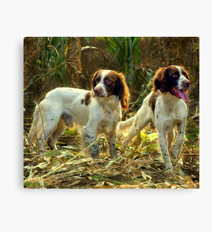 Springer brothers Canvas Print