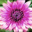 Flower in Motion © by Dawn Becker