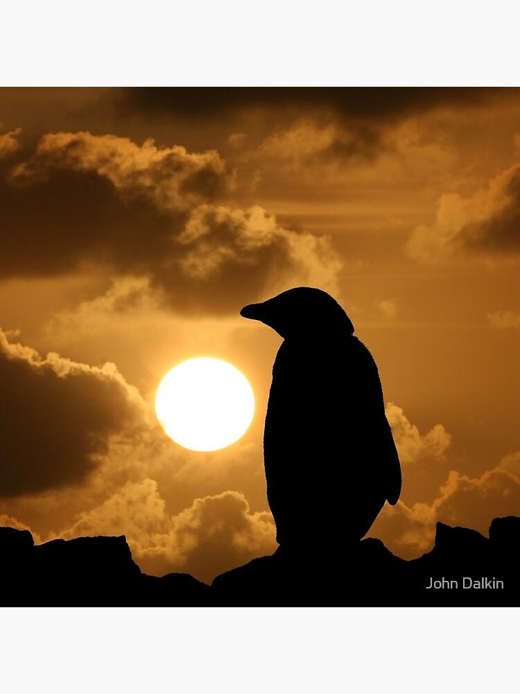 Penguin Silhouette by JohnDalkin