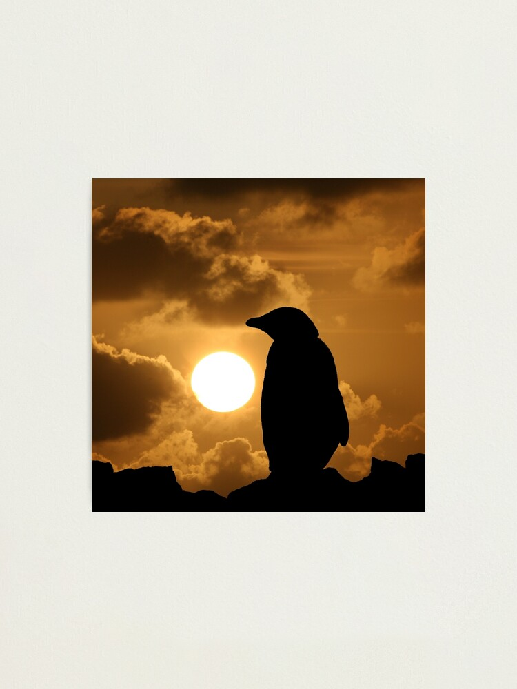 Alternate view of Penguin Silhouette Photographic Print