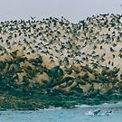 Seal Island by Imagery