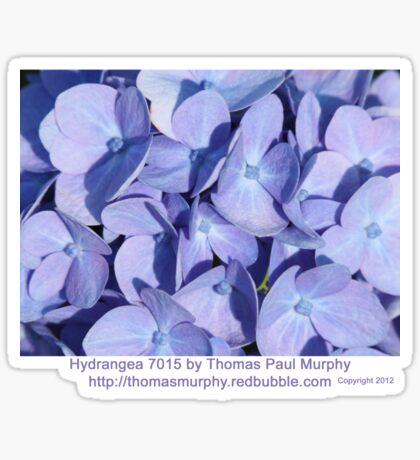 Hydrangea 7015 Sticker