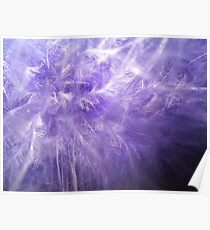 Purple Feathers Poster