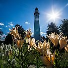 A lighthouse in the sun with a flowery foreground by Sven Brogren