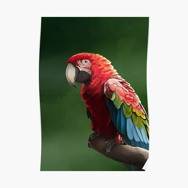 Green-wing Macaw Poster