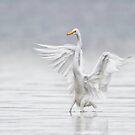 Landing in the Fog by Daniel  Parent